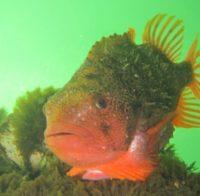 Kaas & Wijnavond Adventure Diving @ 't Verloren Hofke